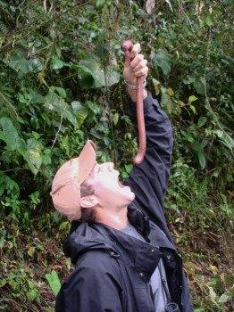 Если вы заблудились в лесу. Готовим дождевых червей.