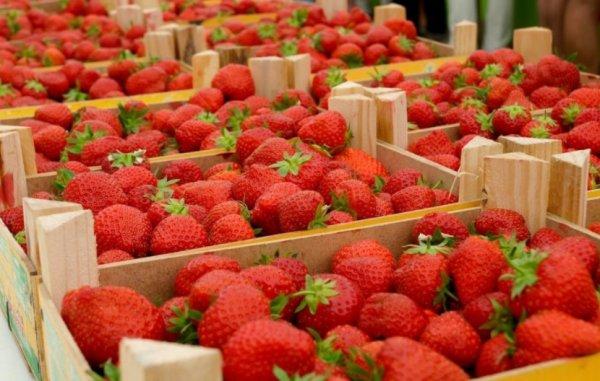 Какие овощи и фрукты напичканы пестицидами, а какие есть можно?