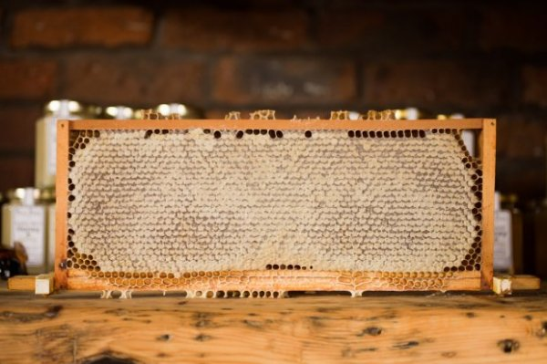 Интересные факты о мёде:полезен ли мед на самом деле