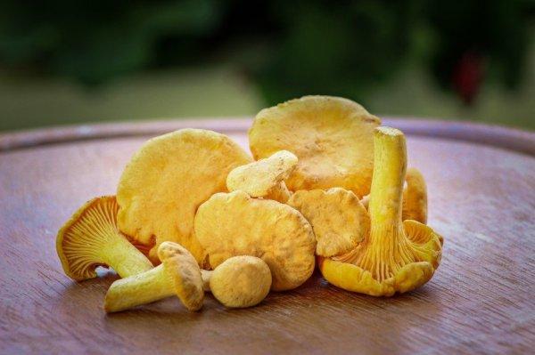 Подборка лучших рецептов заготовки различных грибов на зиму