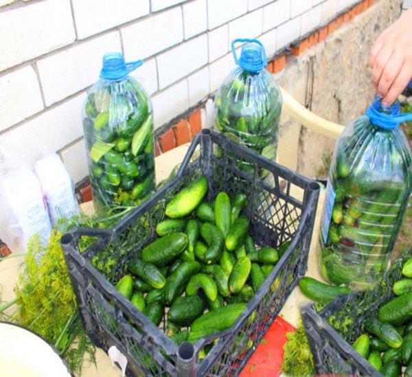 Солёные огурчики в пластиковой бутылке, вкусные, как будто бочковые.