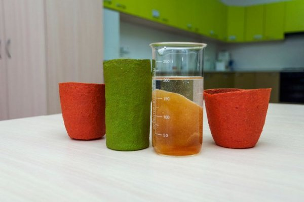 Ученые Самарского политеха сделали одноразовую съедобную посуду из яблок