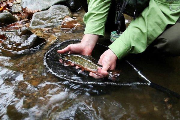 Самая полезная для здоровья рыба обитает в России. Рецепт приготовления в духовке.