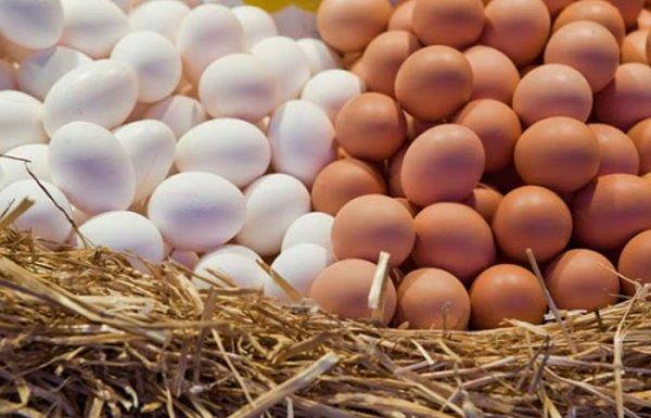 В чём отличие белых куриных яиц от яиц коричневых