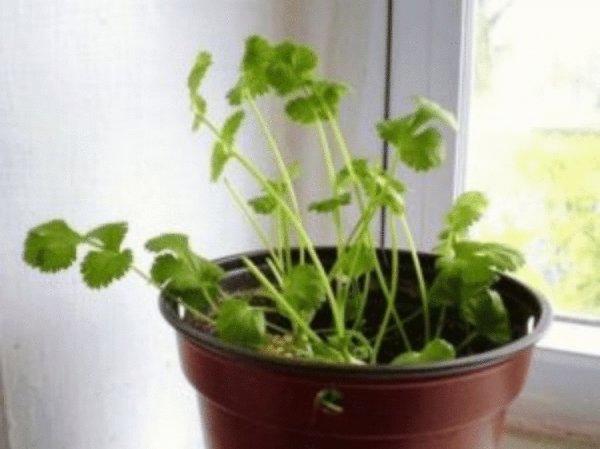 8 овощей, которые можно купить один раз, а потом выращивать повторно