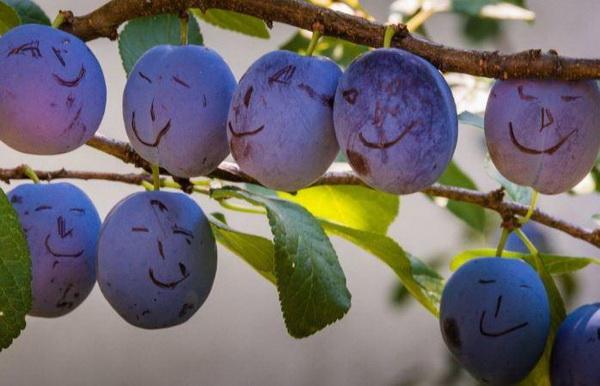 Ученые назвали фрукт, который помогает предотвратить риск развития тромбоза.