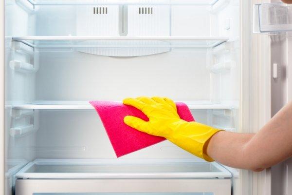 Где заводятся 80 процентов бактерий в каждом холодильнике