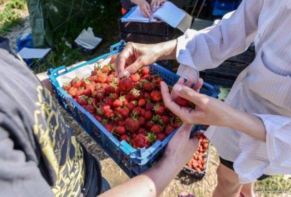 7 причин, почему стоит наедаться досыта клубники в сезон