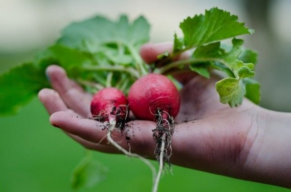 Несколько советов от диетолога, как не отравиться ранними овощами