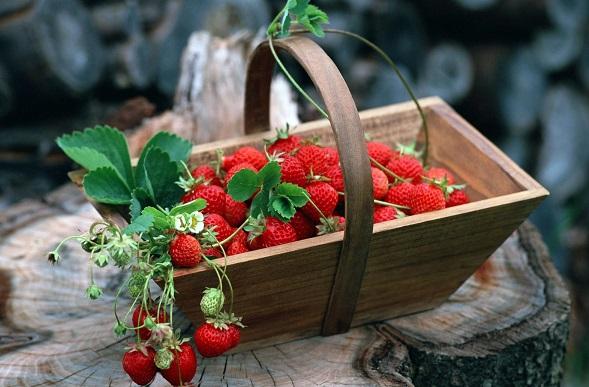 Земляника: Чем так полезна для здоровья эта красная ягода