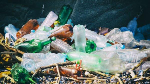 Сколько пластика проникает в организм вместе с продуктами питания