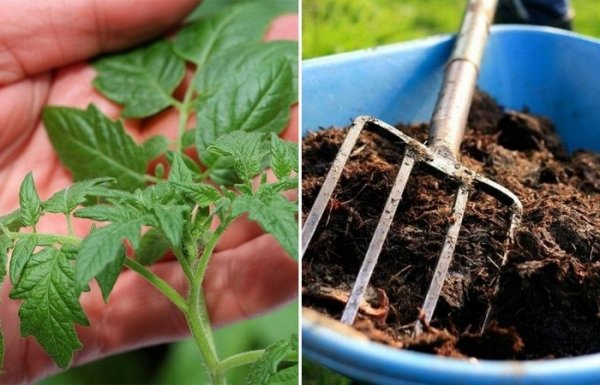 5 советов дачникам, как использовать с пользой для хозяйства ботву от помидор