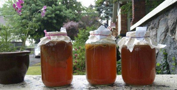 Чайный гриб: Целебные свойства и секреты приготовления