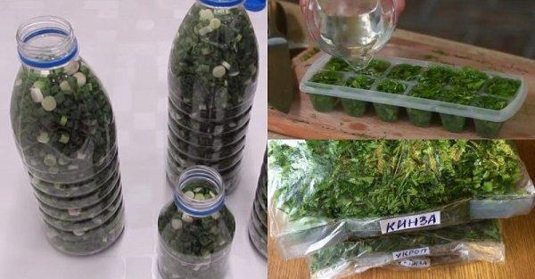 Как правильно заморозить зелень с огорода, чтобы сохранились витамины
