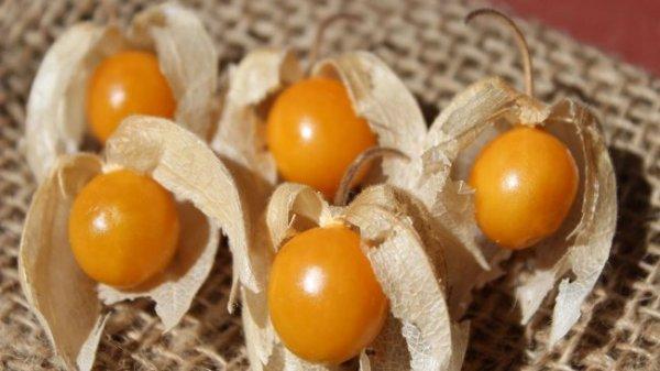 """Удивительный плод для здоровья- """"Золотая ягода"""". (Физалис)"""