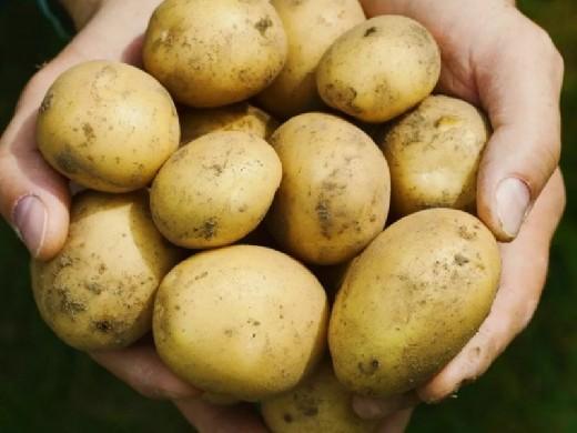 Диетолог рассказал, как повысить метаболизм с помощью картофеля