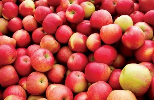 Названы 6 лучших продуктов для укрепления легких