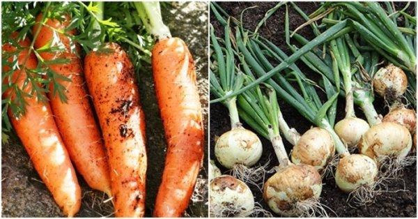Как правильно посадить грядки, чтобы улучшить урожайность