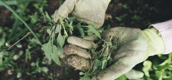 Как бороться с сорняками: 9 быстрых и эффективных способов без химии