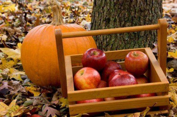 Как дольше сохранить свежесть овощей и фруктов, и какие из них нетерпимы к компании других