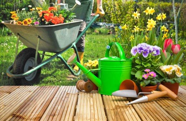 10 вещей, которые нужно успеть сделать в саду в разгар лета