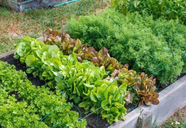 Овощи и цветы, которые еще можно успеть посадить на огороде в августе