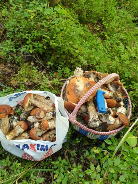 В лес за грибами: мой видеорепортаж