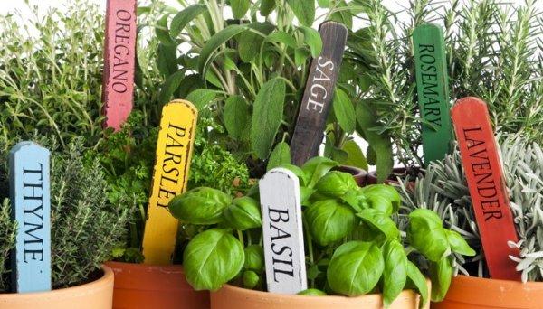 Какие травы-приправы можно выращивать на кухне, и советы по их высадке