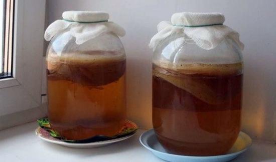 Комбуча, SCOBY или по нашему чайный гриб