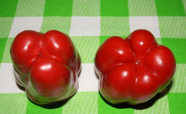 Как отличить болгарский перец «мальчика» от «девочки», и какой лучше выбрать